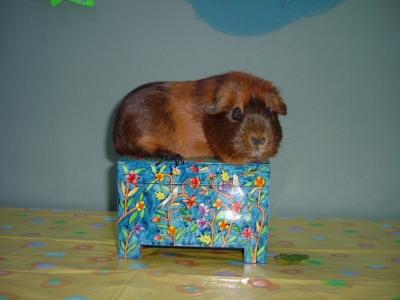 Mocha with etrog box