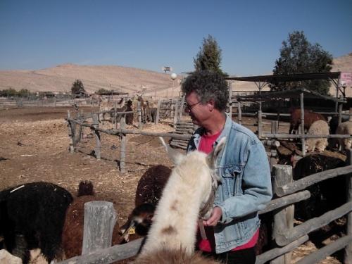 Boaz with alpacas