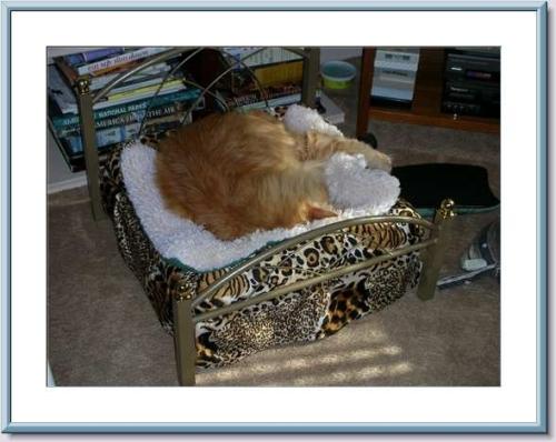 Freddie's bed